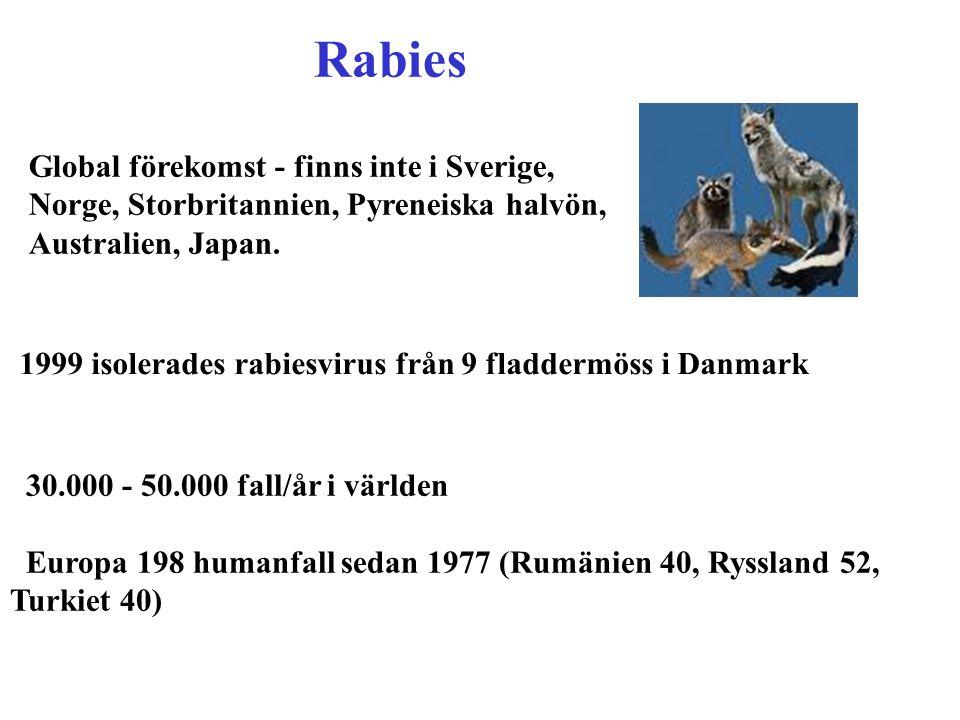 30.000 - 50.000 fall/år i världen Europa 198 humanfall sedan 1977 (Rumänien 40, Ryssland 52, Turkiet 40) Rabies Global förekomst - finns inte i Sverig