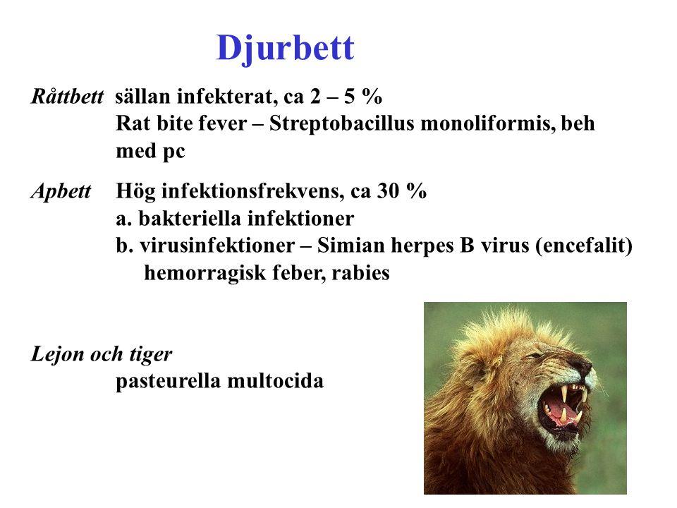 Råttbett sällan infekterat, ca 2 – 5 % Rat bite fever – Streptobacillus monoliformis, beh med pc Apbett Hög infektionsfrekvens, ca 30 % a. bakteriella