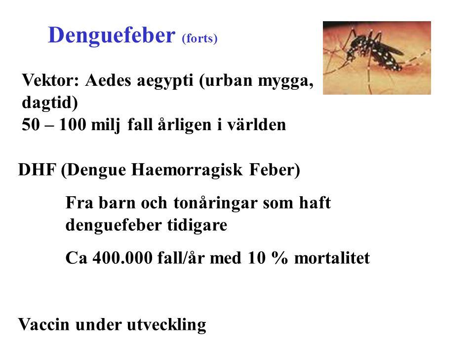 Denguefeber (forts) DHF (Dengue Haemorragisk Feber) Fra barn och tonåringar som haft denguefeber tidigare Ca 400.000 fall/år med 10 % mortalitet Vacci