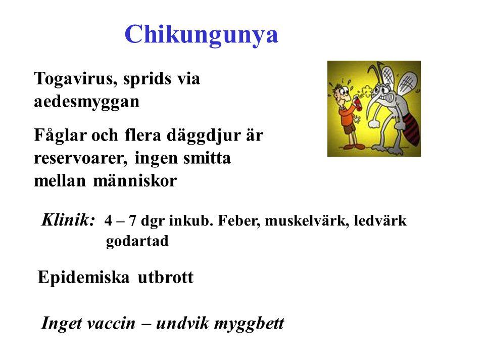 Chikungunya Togavirus, sprids via aedesmyggan Fåglar och flera däggdjur är reservoarer, ingen smitta mellan människor Klinik: 4 – 7 dgr inkub. Feber,
