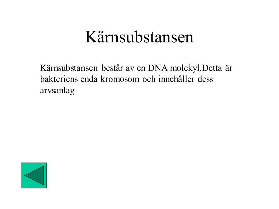 Kärnsubstansen Kärnsubstansen består av en DNA molekyl.Detta är bakteriens enda kromosom och innehåller dess arvsanlag