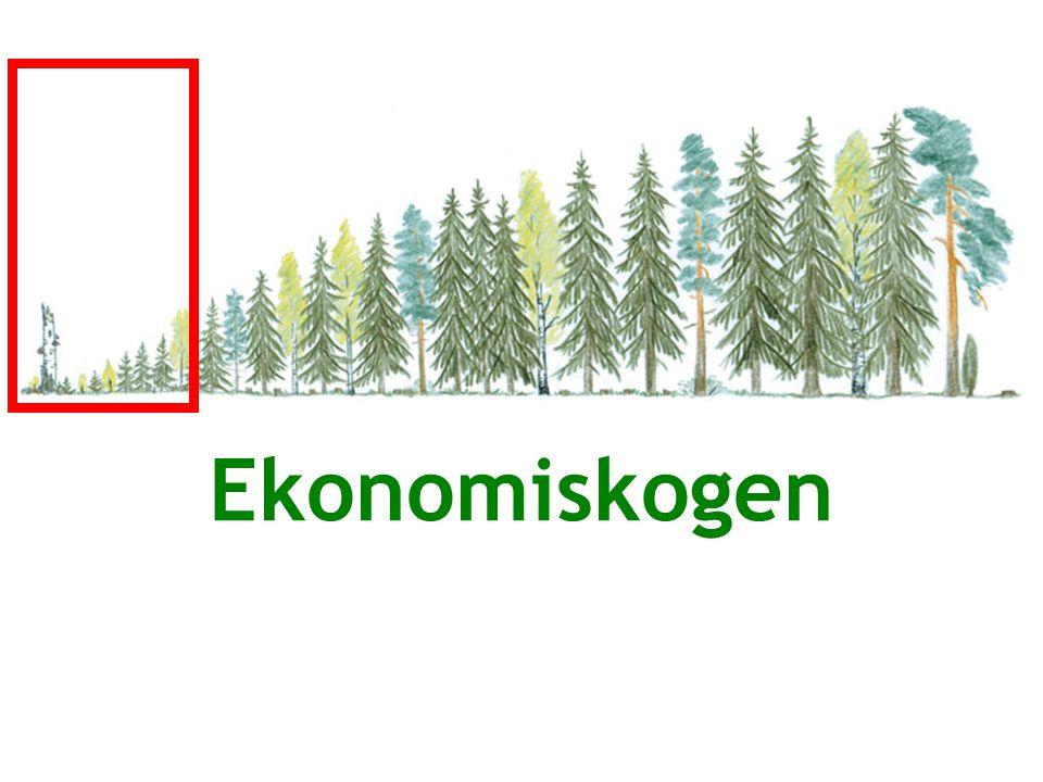Ekonomiskogen 01/2011 10 / 13 Exempel på produkter av stockar Har trädslagen någon betydelse?