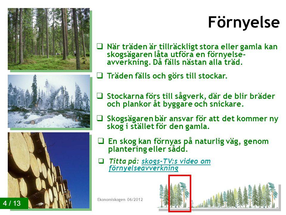 Förnyelse  När träden är tillräckligt stora eller gamla kan skogsägaren låta utföra en förnyelse- avverkning.