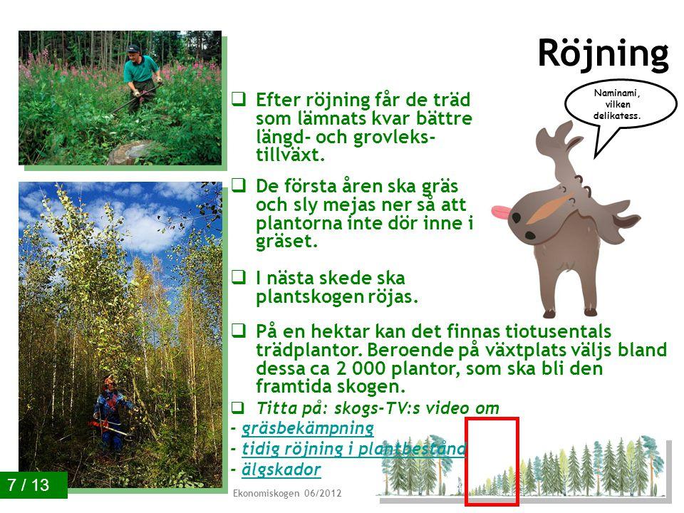 Plantering och sådd  Skog kan också förnyas genom plantering och sådd.