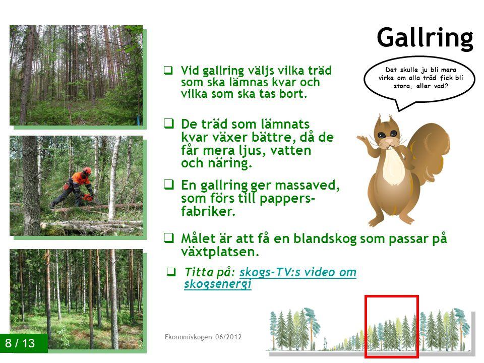 Gallring  Vid gallring väljs vilka träd som ska lämnas kvar och vilka som ska tas bort.