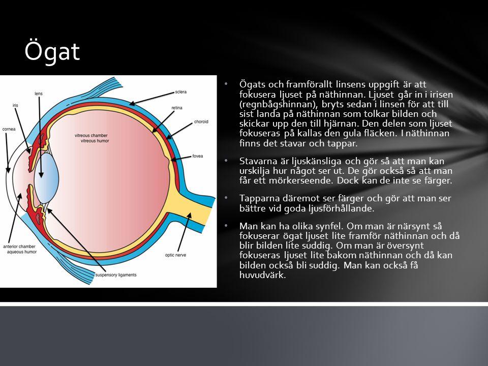Ögat Ögats och framförallt linsens uppgift är att fokusera ljuset på näthinnan.