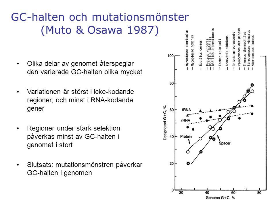 24 GC-halten och mutationsmönster (Muto & Osawa 1987) Olika delar av genomet återspeglar den varierade GC-halten olika mycket Variationen är störst i