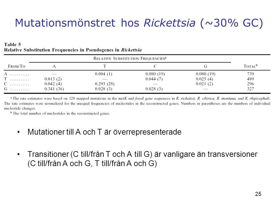 25 Mutationsmönstret hos Rickettsia (~30% GC) Mutationer till A och T är överrepresenterade Transitioner (C till/från T och A till G) är vanligare än