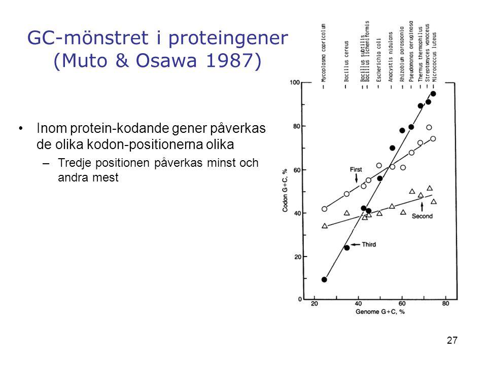 27 GC-mönstret i proteingener (Muto & Osawa 1987) Inom protein-kodande gener påverkas de olika kodon-positionerna olika –Tredje positionen påverkas mi