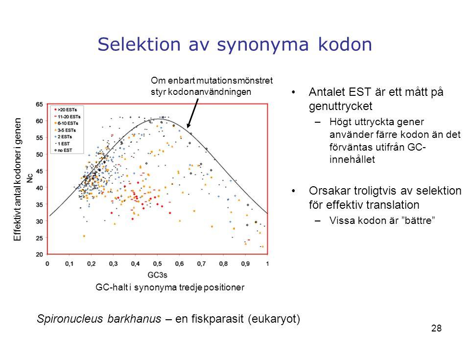 28 Selektion av synonyma kodon Antalet EST är ett mått på genuttrycket –Högt uttryckta gener använder färre kodon än det förväntas utifrån GC- innehål