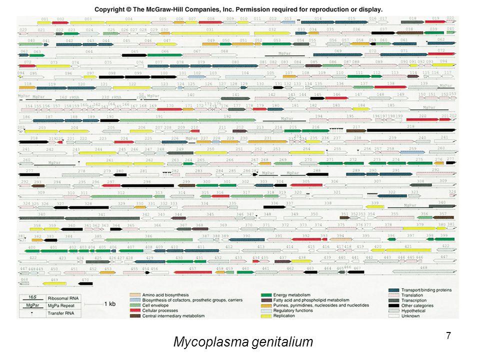 7 Mycoplasma genitalium