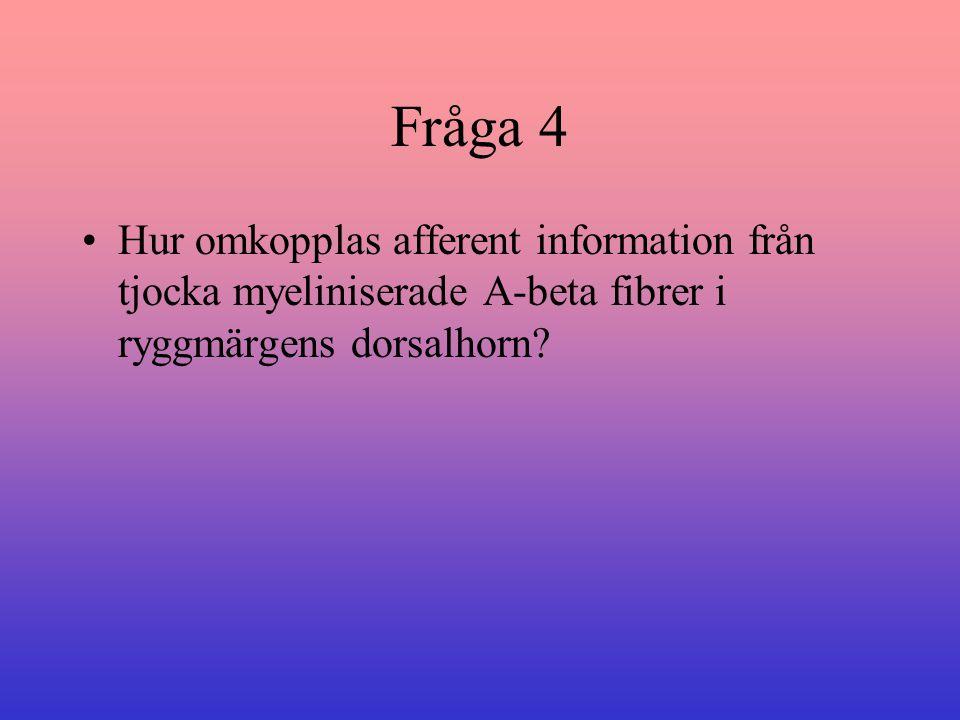 Fråga 4 Hur omkopplas afferent information från tjocka myeliniserade A-beta fibrer i ryggmärgens dorsalhorn?
