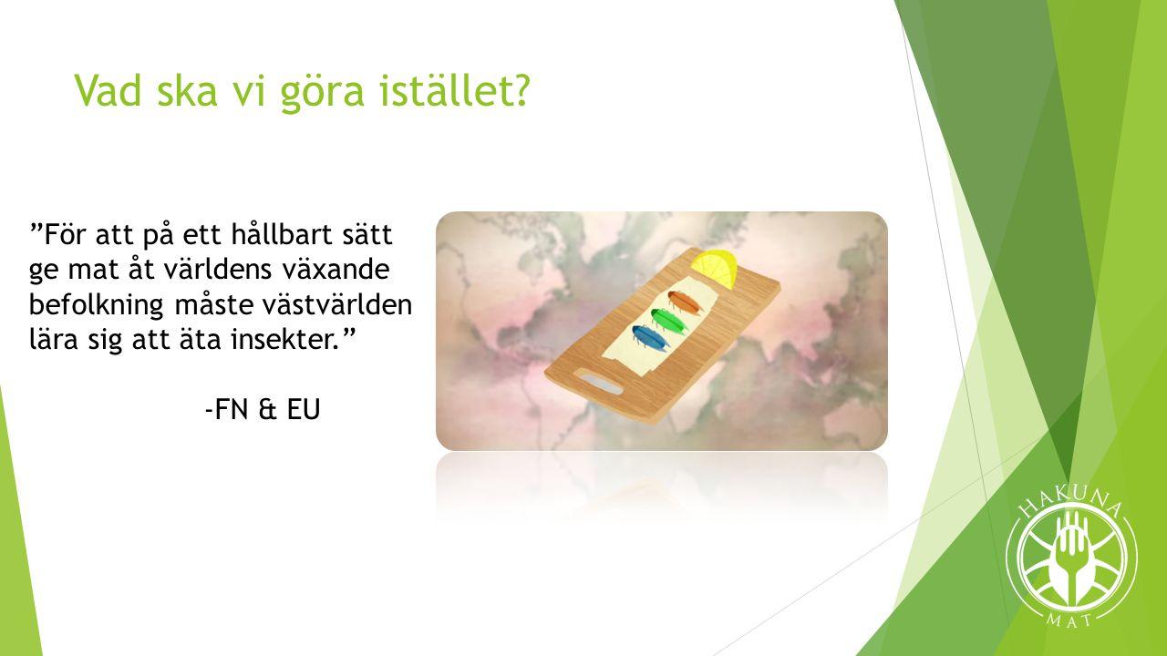 EU:s besvärande regler  Nuvarande regler  Gråzon  Kommande regler  Vissa insekter tillåts, nya måste godkännas