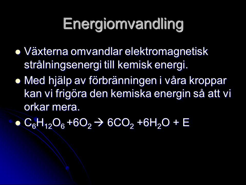 Energiomvandling Växterna omvandlar elektromagnetisk strålningsenergi till kemisk energi. Växterna omvandlar elektromagnetisk strålningsenergi till ke