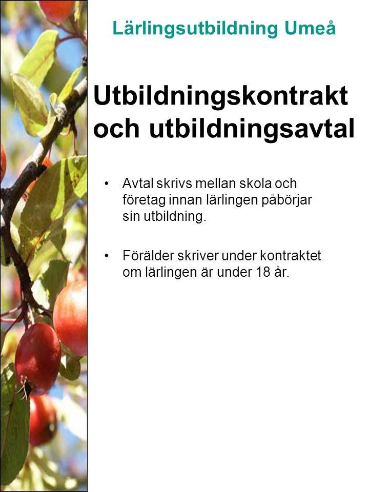 Schemaförslag Årskurs 1 Två dagar i lärlingsföretaget Tre dagar är skolförlagd tid Årskurs 2 Tre dagar i lärlingsföretaget Två dagar är skolförlagd tid Årskurs 3 Fem dagar i lärlingsföretaget Lärlingsutbildning Umeå