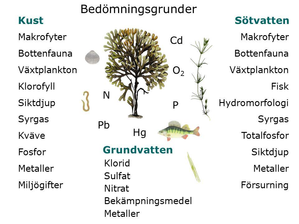 Makrofyter Bottenfauna Växtplankton Fisk Hydromorfologi Syrgas Totalfosfor Siktdjup Metaller Försurning Makrofyter Bottenfauna Växtplankton Klorofyll