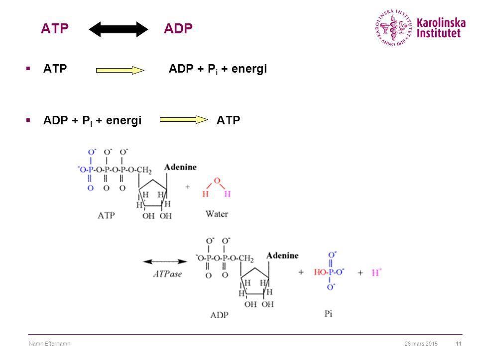 26 mars 2015Namn Efternamn11 ATP ADP  ATPADP + P i + energi  ADP + P i + energiATP
