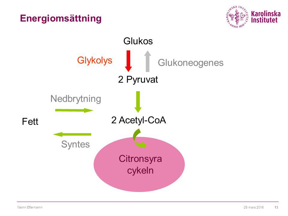 26 mars 2015Namn Efternamn13 Energiomsättning 2 Acetyl-CoA 2 Pyruvat Citronsyra cykeln Fett Glukoneogenes Glukos Syntes Nedbrytning Glykolys