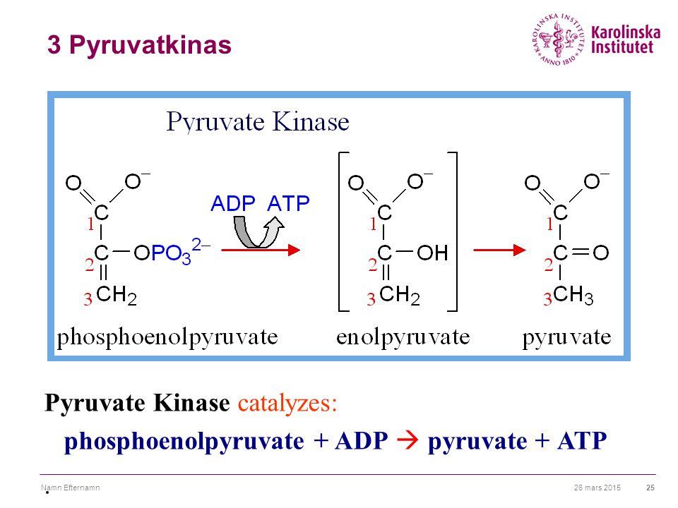 26 mars 2015Namn Efternamn25 3 Pyruvatkinas Pyruvate Kinase catalyzes: phosphoenolpyruvate + ADP  pyruvate + ATP.