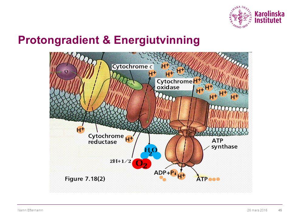 26 mars 2015Namn Efternamn45 Protongradient & Energiutvinning