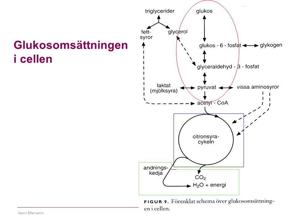 26 mars 2015Namn Efternamn49 Viktiga begrepp Metabolism, anabolism, katabolism, elektronbärare, NAD+, FAD, kopplade reaktioner, energirika bindningar Ska kunna Översikt av citronsyracykeln och andningskedjan, Fylla i citronsyracykeln om en molekyl fattas Lokalisation för glykolys, citronsyracykel samt andningskedjan Förstå hur ATP bildas i andningskedjan Ska känna igen ATP, pyruvat, laktat, acetylCoA, Länkar http://www.tcd.ie/Biochemistry/IUBMB-Nicholson/swf/ATPSynthase.swf vacker animering av protongradient i mitokondrier http://www.youtube.com/watch?v=lvoZ21P4JK8&feature=related Animering av citronsyracykeln http://www.youtube.com/watch?v=9UM78eqy1oc Jättebra animering av andningskedjan