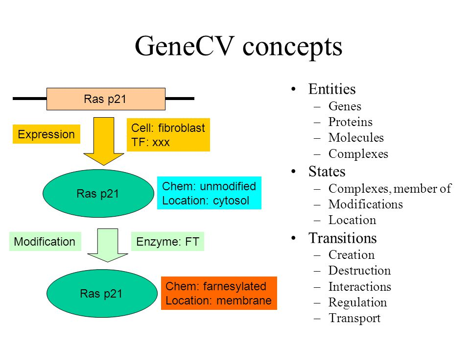 Ras p21 GeneCV concepts Entities –Genes –Proteins –Molecules –Complexes States –Complexes, member of –Modifications –Location Transitions –Creation –Destruction –Interactions –Regulation –Transport Ras p21 Chem: unmodified Location: cytosol Ras p21 Chem: farnesylated Location: membrane Cell: fibroblast TF: xxx Expression Enzyme: FTModification