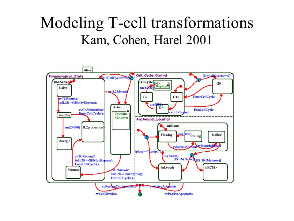 Modeling T-cell transformations Kam, Cohen, Harel 2001