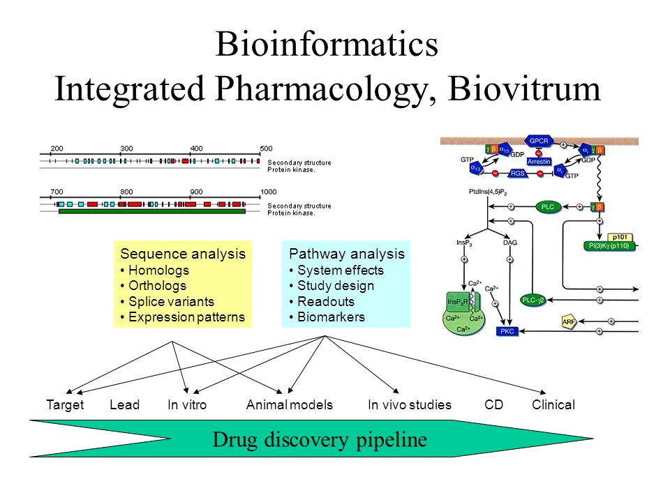 Bioinformatics Integrated Pharmacology, Biovitrum Sequence analysis Homologs Orthologs Splice variants Expression patterns Pathway analysis System eff