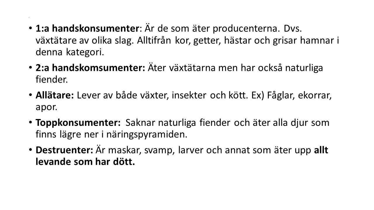 . 1:a handskonsumenter: Är de som äter producenterna. Dvs. växtätare av olika slag. Alltifrån kor, getter, hästar och grisar hamnar i denna kategori.