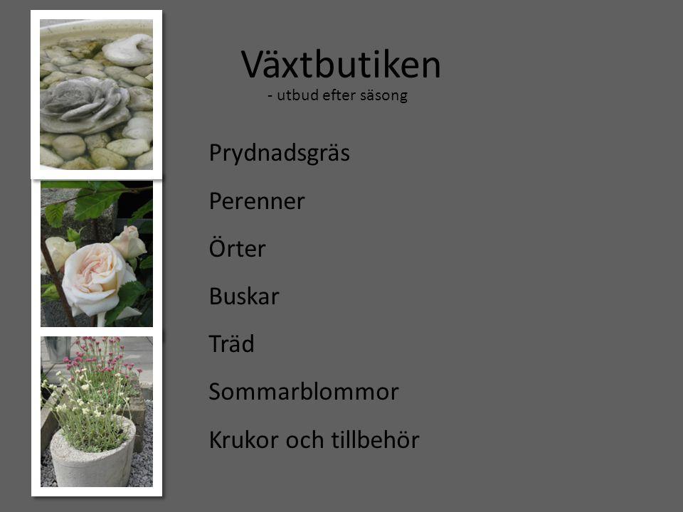 Växtbutiken Prydnadsgräs Perenner Örter Buskar Träd Sommarblommor Krukor och tillbehör - utbud efter säsong
