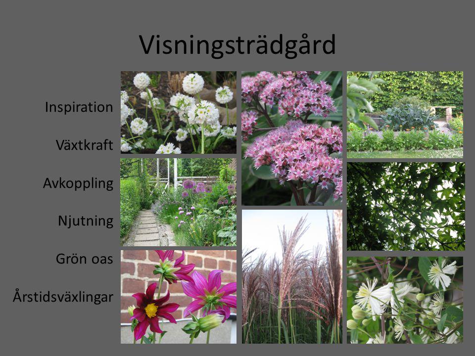 Visningsträdgård Inspiration Växtkraft Avkoppling Njutning Grön oas Årstidsväxlingar