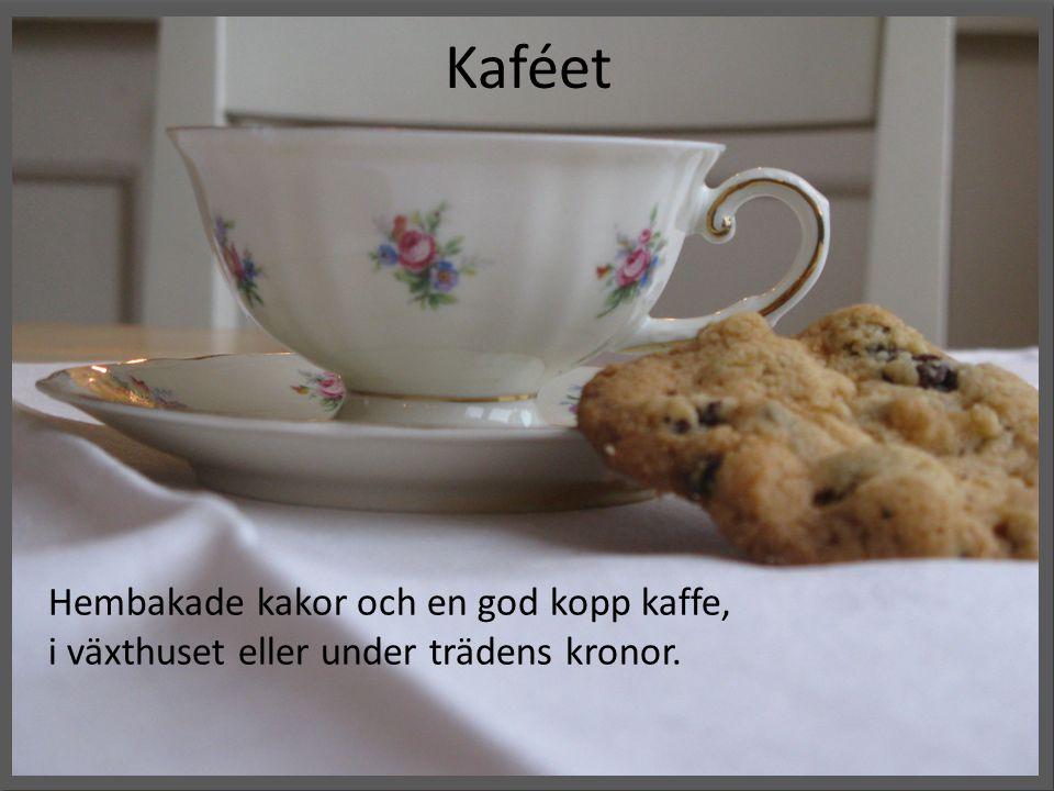 Kaféet Hembakade kakor och en god kopp kaffe, i växthuset eller under trädens kronor.