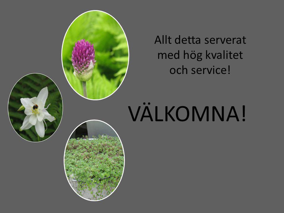 Om mig -Utbildad trädgårdsmästare med yrkesexamen från Hvilan utbildning -Arbetslivserfarenhet från partiplantskola med perenner, örter och gräs.