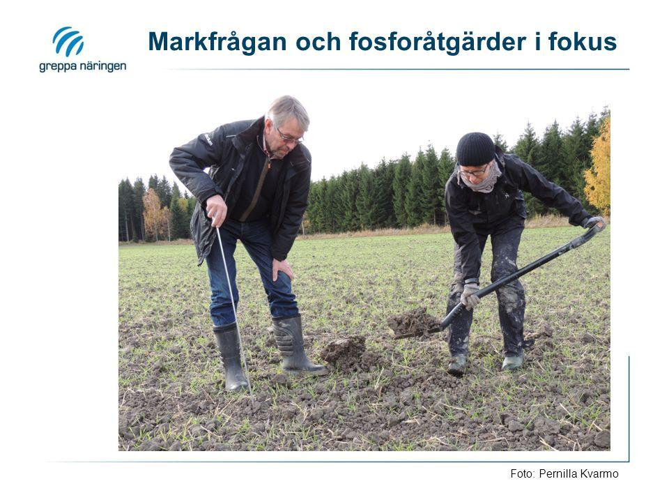 Markfrågan och fosforåtgärder i fokus Foto: Pernilla Kvarmo