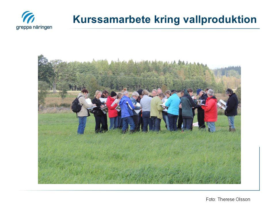 Kurssamarbete kring vallproduktion Foto: Therese Olsson