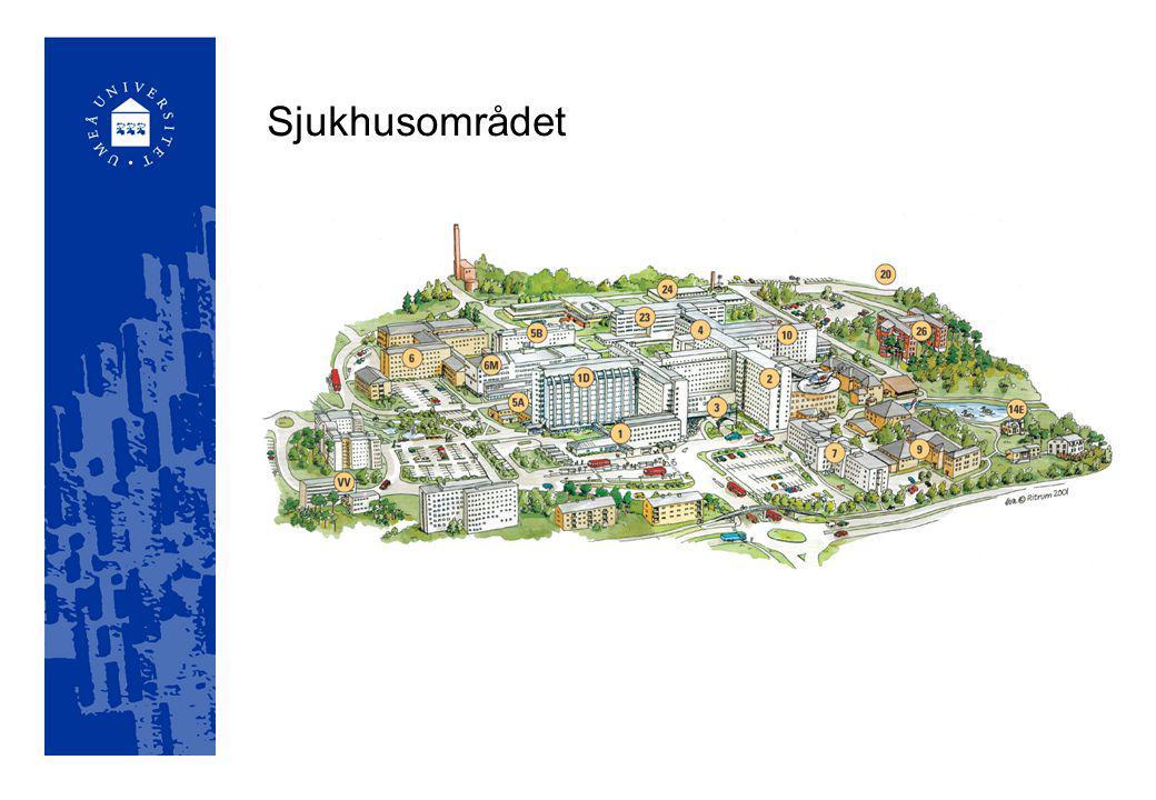 Umeå universitet – inte bara i Umeå Campus Skellefteå – nära 500 studenter, 12 program Campus Örnsköldsvik – drygt 200 studenter, 11 program Kiruna – nära 200 studenter, 3 program Lycksele – nära 100 studenter, 3 program Sollefteå – nära 200 studenter, 2 program Dessutom kurser med annan kursort än Umeå på ytterligare 20 orter