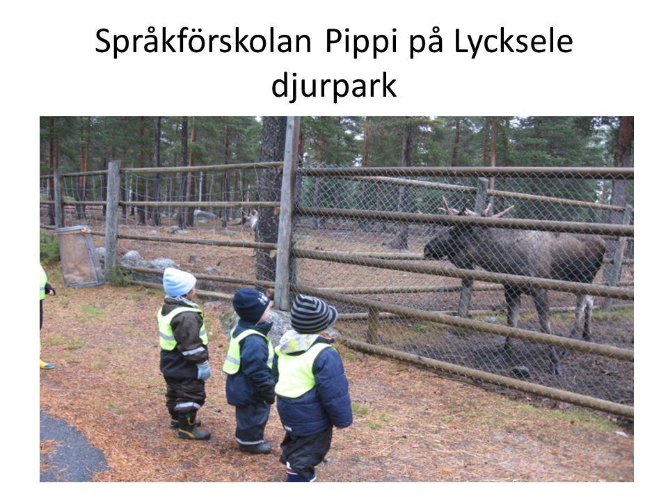 Språkförskolan Pippi på Lycksele djurpark