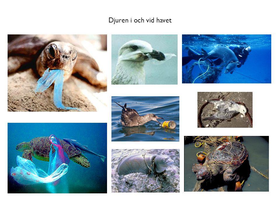 Djuren i och vid havet