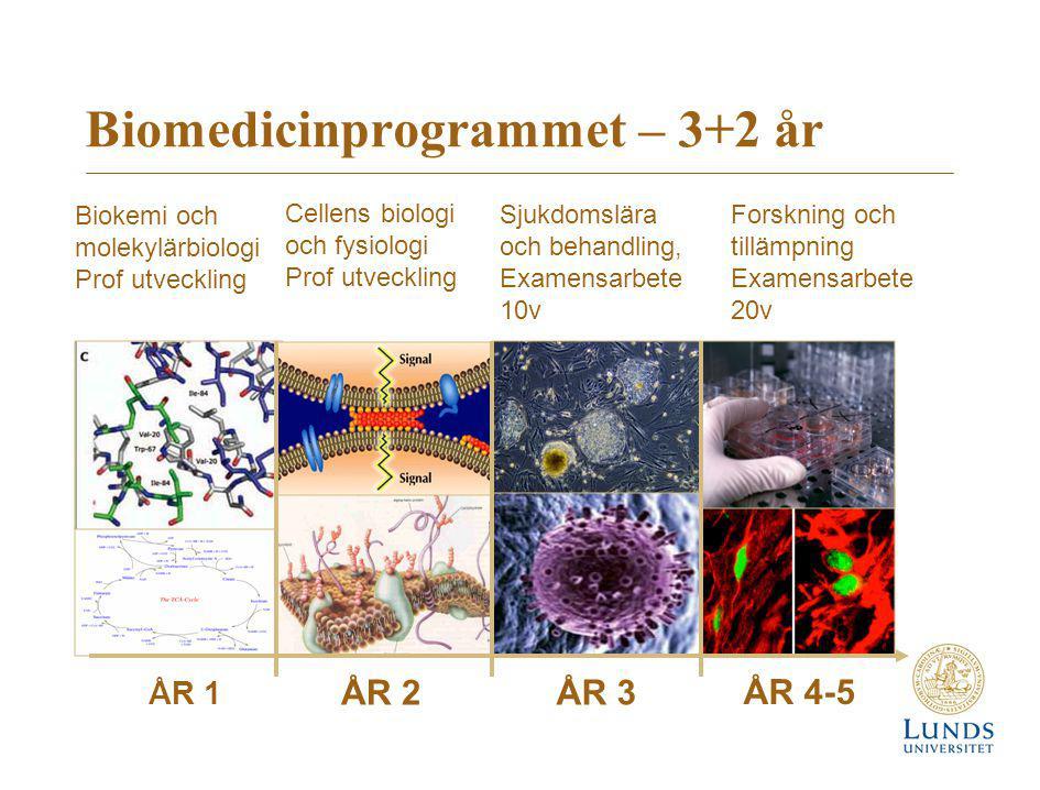 Biomedicinprogrammet – 3+2 år ÅR 1 ÅR 2 ÅR 3 ÅR 4-5 Cellens biologi och fysiologi Prof utveckling Sjukdomslära och behandling, Examensarbete 10v Forsk