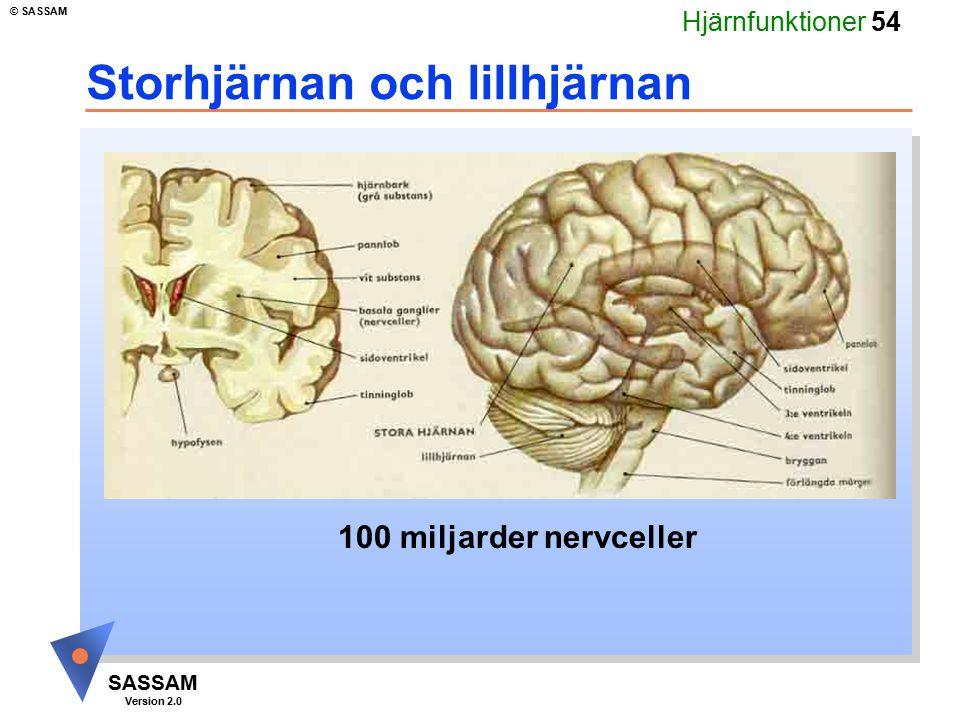Hjärnfunktioner 54 SASSAM Version 2.0 © SASSAM Storhjärnan och lillhjärnan 100 miljarder nervceller