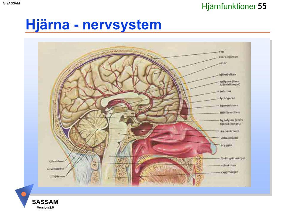 Hjärnfunktioner 55 SASSAM Version 2.0 © SASSAM Hjärna - nervsystem