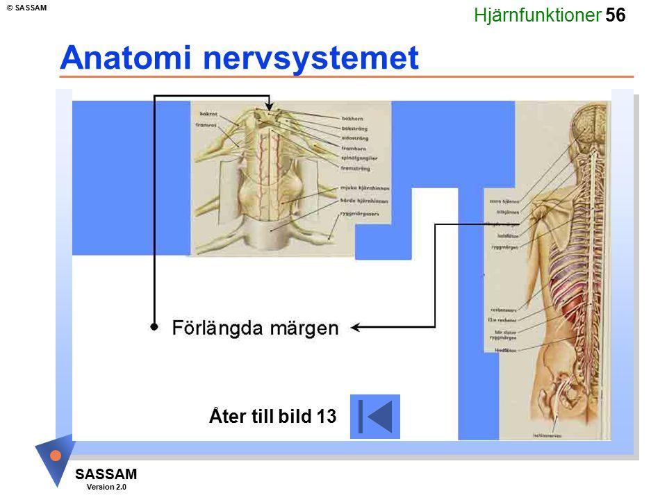 Hjärnfunktioner 56 SASSAM Version 2.0 © SASSAM Anatomi nervsystemet Åter till bild 13