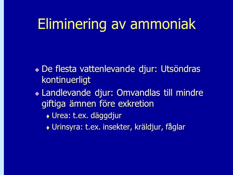 Eliminering av ammoniak  De flesta vattenlevande djur: Utsöndras kontinuerligt  Landlevande djur: Omvandlas till mindre giftiga ämnen före exkretion  Urea: t.ex.