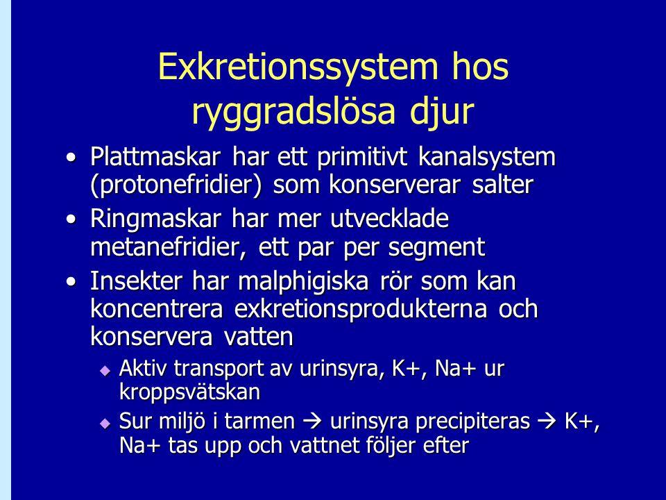 Exkretionssystem hos ryggradslösa djur Plattmaskar har ett primitivt kanalsystem (protonefridier) som konserverar salterPlattmaskar har ett primitivt