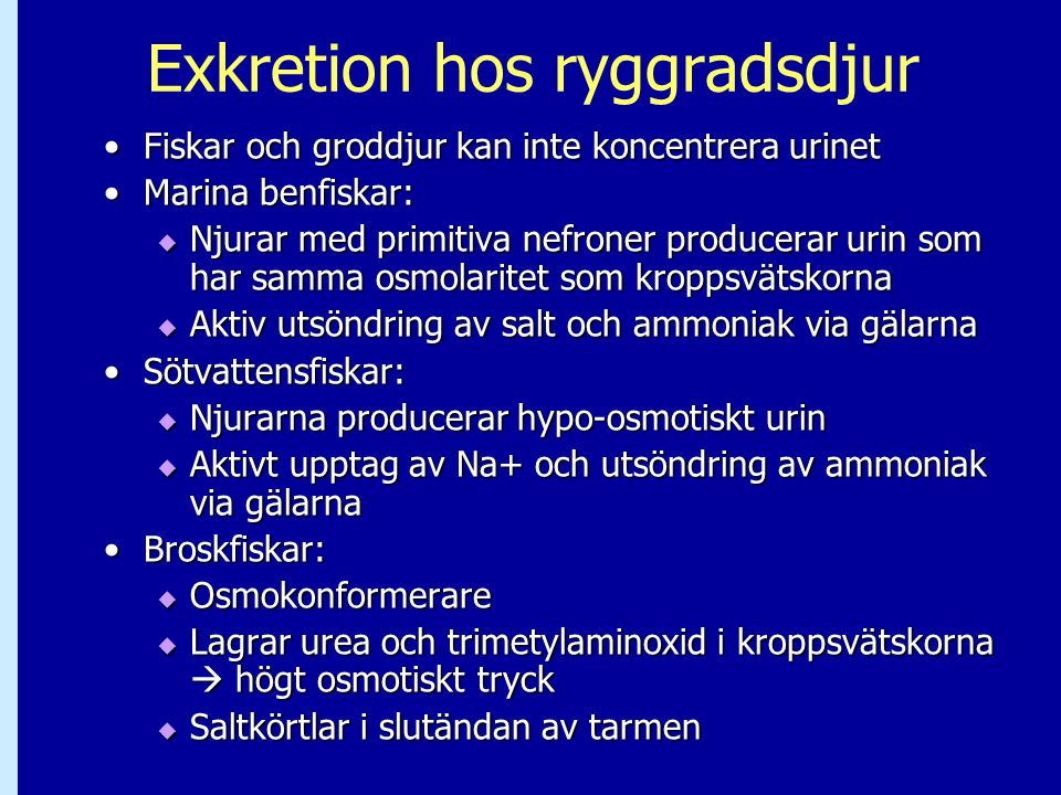 Exkretion hos ryggradsdjur Fiskar och groddjur kan inte koncentrera urinetFiskar och groddjur kan inte koncentrera urinet Marina benfiskar:Marina benfiskar:  Njurar med primitiva nefroner producerar urin som har samma osmolaritet som kroppsvätskorna  Aktiv utsöndring av salt och ammoniak via gälarna Sötvattensfiskar:Sötvattensfiskar:  Njurarna producerar hypo-osmotiskt urin  Aktivt upptag av Na+ och utsöndring av ammoniak via gälarna Broskfiskar:Broskfiskar:  Osmokonformerare  Lagrar urea och trimetylaminoxid i kroppsvätskorna  högt osmotiskt tryck  Saltkörtlar i slutändan av tarmen