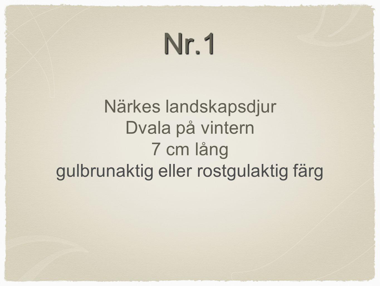 Nr.1 Nr.1 Närkes landskapsdjur Dvala på vintern 7 cm lång gulbrunaktig eller rostgulaktig färg