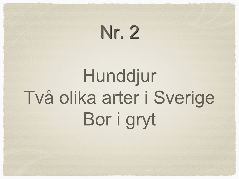 Nr. 2 Nr. 2 Hunddjur Två olika arter i Sverige Bor i gryt