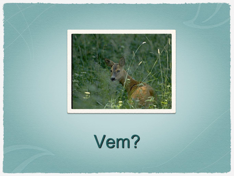 Gemensamt Alla är däggdjur som finns vilt i Sverige.