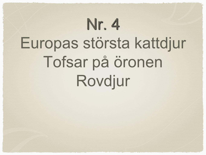 Nr. 4 Nr. 4 Europas största kattdjur Tofsar på öronen Rovdjur