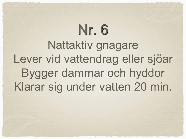 Nr. 6 Nr. 6 Nattaktiv gnagare Lever vid vattendrag eller sjöar Bygger dammar och hyddor Klarar sig under vatten 20 min.